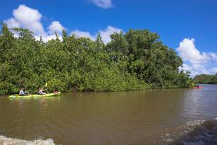 ワイルア川沿いの密林の写真素材 [FYI01728359]