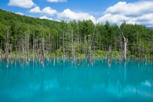 美瑛白金の青い池の写真素材 [FYI01728839]
