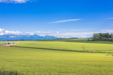 美瑛の田園風景の写真素材 [FYI01729658]