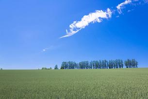 美瑛のマイルドセブンの丘の写真素材 [FYI01729916]