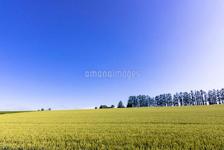 丘の町・美瑛の田園風景の写真素材 [FYI01730002]