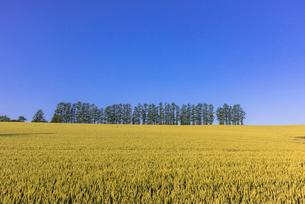 丘の町・美瑛の田園風景の写真素材 [FYI01730023]
