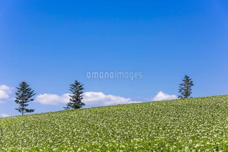 丘の町・美瑛の田園風景の写真素材 [FYI01730064]
