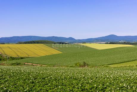 丘の町・美瑛の田園風景の写真素材 [FYI01730096]