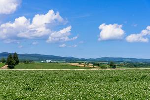 丘の町・美瑛の田園風景の写真素材 [FYI01730203]