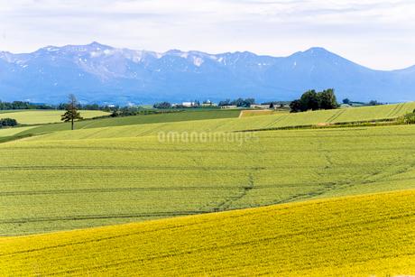 丘の町・美瑛の田園風景の写真素材 [FYI01730215]