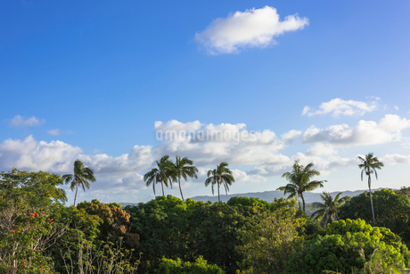 ヤシの木と雲の写真素材 [FYI01730224]