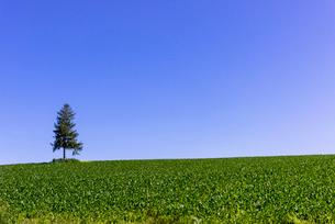 丘の町・美瑛の田園風景の写真素材 [FYI01730327]