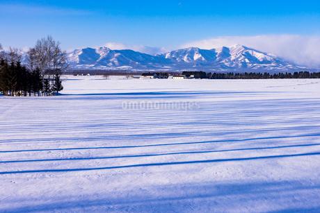 北の大地の雪景色の写真素材 [FYI01730422]