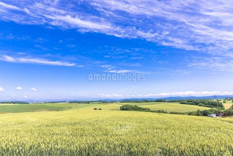 丘の町・美瑛の田園風景の写真素材 [FYI01730452]
