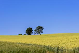 丘の町・美瑛の田園風景の写真素材 [FYI01730549]