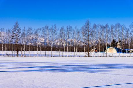 北の大地の雪景色の写真素材 [FYI01730660]