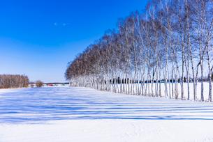 北の大地の雪景色の写真素材 [FYI01730730]