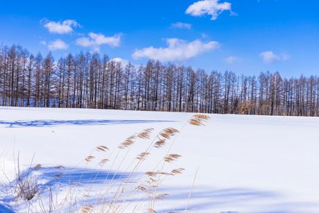 北の大地の雪景色の写真素材 [FYI01730868]