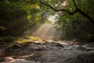 菊池渓谷の光芒の写真素材 [FYI01730885]