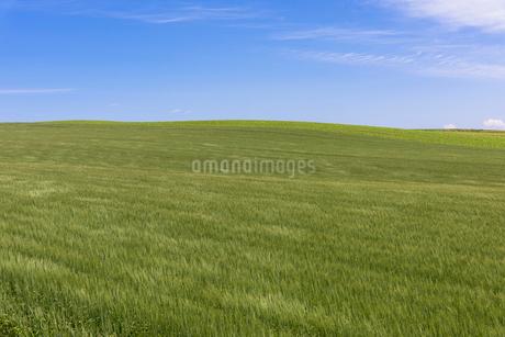丘の町・美瑛の田園風景の写真素材 [FYI01730906]
