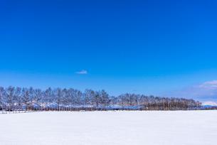 北の大地の雪景色の写真素材 [FYI01730909]
