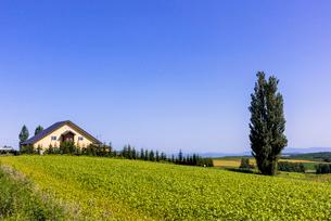 丘の町・美瑛の田園風景の写真素材 [FYI01730980]