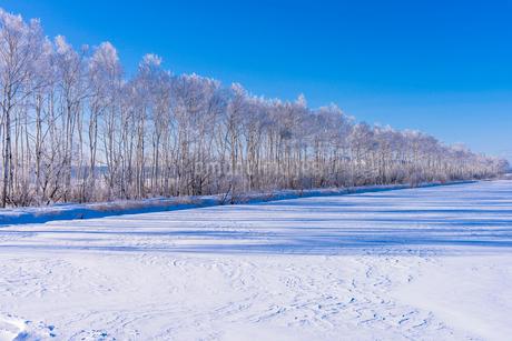 北の大地の雪景色の写真素材 [FYI01731037]