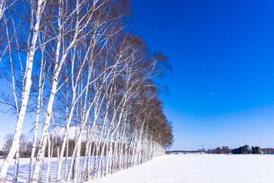 北の大地の雪景色の写真素材 [FYI01731048]