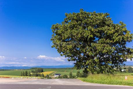 丘の町・美瑛の田園風景の写真素材 [FYI01731073]