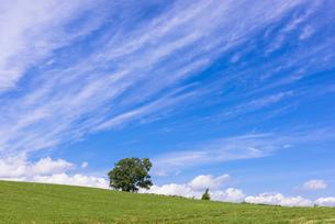 丘の町・美瑛の田園風景の写真素材 [FYI01731144]