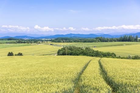 丘の町・美瑛の田園風景の写真素材 [FYI01731152]