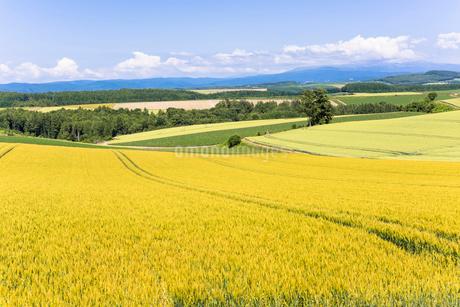 丘の町・美瑛の田園風景の写真素材 [FYI01731156]