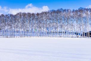 北の大地の雪景色の写真素材 [FYI01731164]