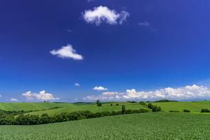 丘の町・美瑛の田園風景の写真素材 [FYI01731193]
