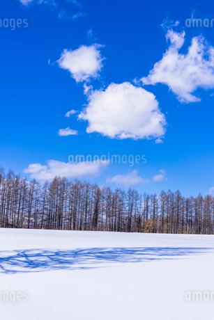 北の大地の雪景色の写真素材 [FYI01731296]