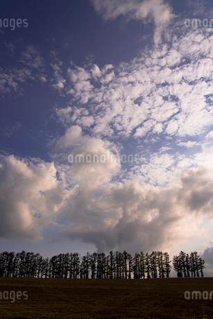 丘の町美瑛のパッチワークの路の写真素材 [FYI01731307]