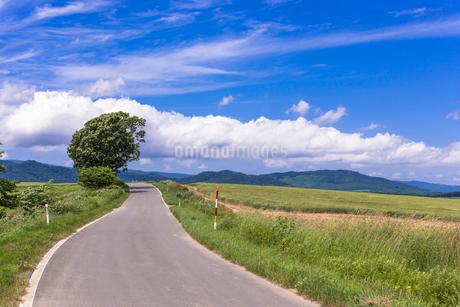 丘の町・美瑛の田園風景の写真素材 [FYI01731318]