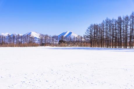 北の大地の雪景色の写真素材 [FYI01731322]
