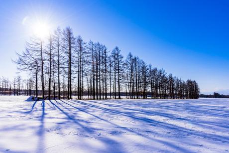 北の大地の雪景色の写真素材 [FYI01731367]