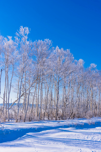 北の大地の雪景色の写真素材 [FYI01731409]