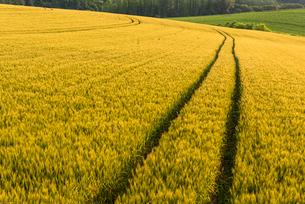 丘の町・美瑛の田園風景の写真素材 [FYI01731436]
