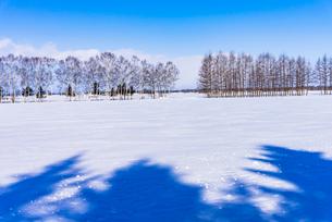 北の大地の雪景色の写真素材 [FYI01731539]
