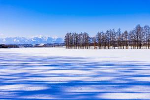 北の大地の雪景色の写真素材 [FYI01731584]