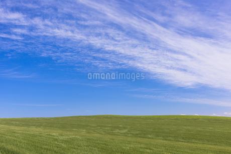 丘の町・美瑛の田園風景の写真素材 [FYI01731681]