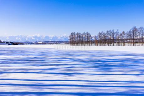 北の大地の雪景色の写真素材 [FYI01731690]
