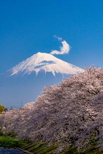 龍巌淵の満開の桜と富士山の写真素材 [FYI01731722]