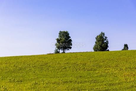 丘の町・美瑛の田園風景の写真素材 [FYI01731734]