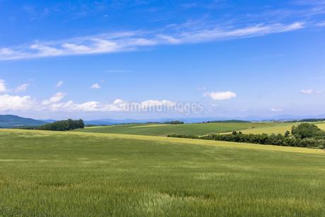 丘の町・美瑛の田園風景の写真素材 [FYI01731763]