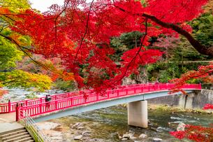 紅葉美しい香嵐渓の秋の写真素材 [FYI01731790]