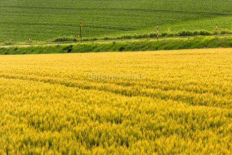 丘の町・美瑛の田園風景の写真素材 [FYI01731991]