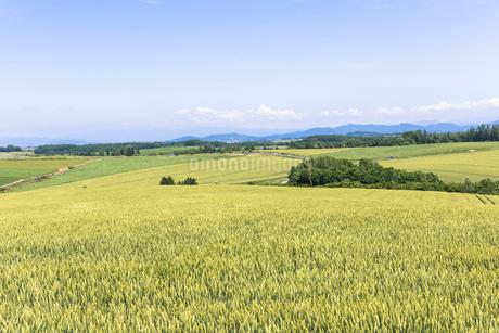 丘の町・美瑛の田園風景の写真素材 [FYI01732022]
