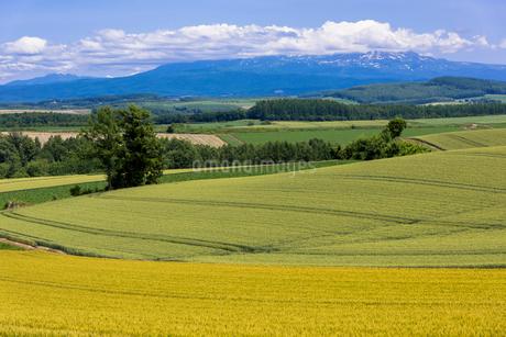 丘の町・美瑛の田園風景の写真素材 [FYI01732039]