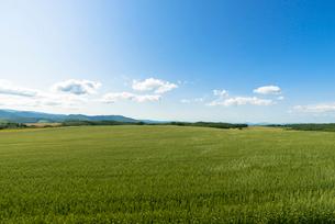 丘の町・美瑛の田園風景の写真素材 [FYI01732043]