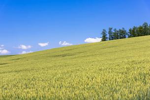 丘の町・美瑛の田園風景の写真素材 [FYI01732205]